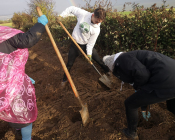 The Afforestation Project