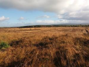 The Lixnaw Bog